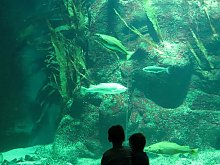 Nationalparks Deutschland - Aquarium im Multimar Wattforum